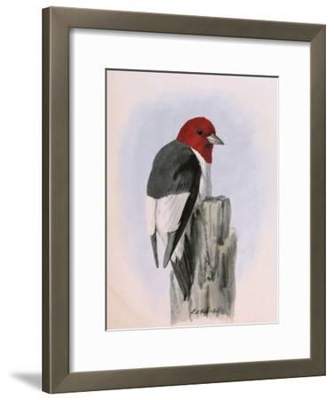 A Painting of a Red-Headed Woodpecker Perched on a Tree Stump-Louis Agassi Fuertes-Framed Giclee Print
