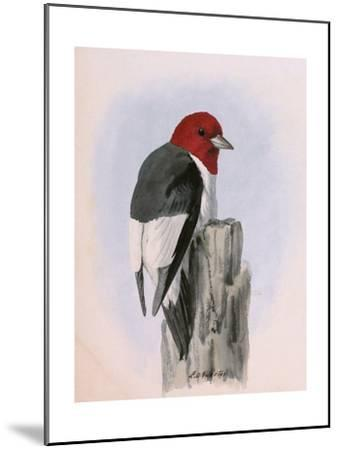 A Painting of a Red-Headed Woodpecker Perched on a Tree Stump-Louis Agassi Fuertes-Mounted Giclee Print