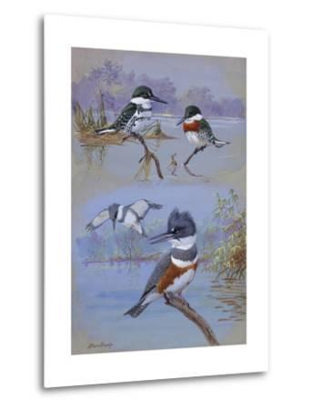 A Painting of Two Belted Kingfishers and Two Texas Green Kingfishers-Allan Brooks-Metal Print