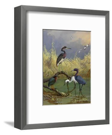Various Herons Feed in Shallow Water-Allan Brooks-Framed Giclee Print