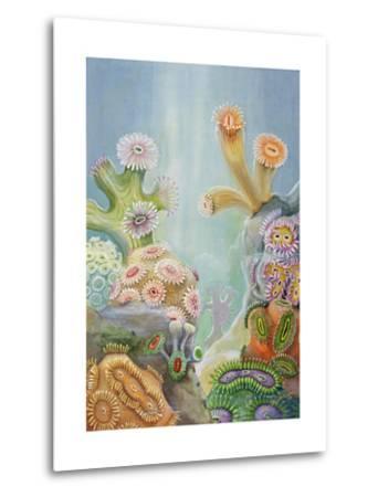 Coral Polyps Reproduce by Splitting in Half-Else Bostelmann-Metal Print
