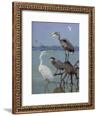 Great White and Blue Herons Perch on a Tree Trunk in Shallow Waters-Allan Brooks-Framed Giclee Print