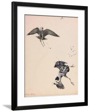 A Painting of a Falcon Striking a Heron in Midair-Louis Agassi Fuertes-Framed Giclee Print