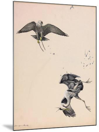 A Painting of a Falcon Striking a Heron in Midair-Louis Agassi Fuertes-Mounted Giclee Print
