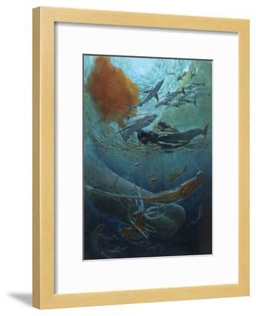 Marine Animals of the Kaikoura Canyon, a Trench Off South Island-John Dawson-Framed Giclee Print