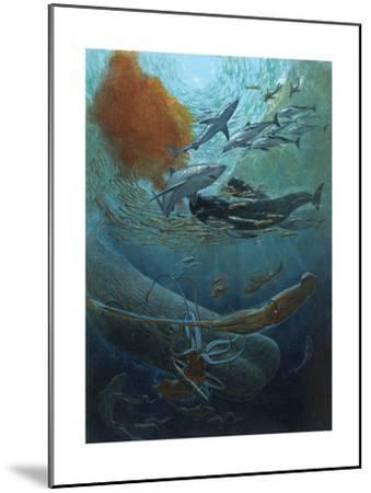 Marine Animals of the Kaikoura Canyon, a Trench Off South Island-John Dawson-Mounted Giclee Print