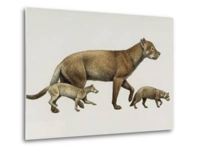 Extinct Dog Ancestors Archaeocyon, Phlaocyon, and Borophagus-Mauricio Anton-Metal Print