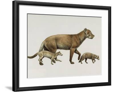 Extinct Dog Ancestors Archaeocyon, Phlaocyon, and Borophagus-Mauricio Anton-Framed Giclee Print