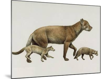 Extinct Dog Ancestors Archaeocyon, Phlaocyon, and Borophagus-Mauricio Anton-Mounted Giclee Print