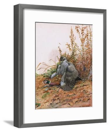 A Painting of a Goshawk as it Attacks a Pheasant-Louis Agassi Fuertes-Framed Giclee Print