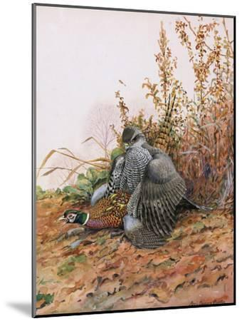A Painting of a Goshawk as it Attacks a Pheasant-Louis Agassi Fuertes-Mounted Giclee Print