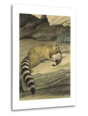 A Ring-Tailed Cat Stands with Paw on it's Prey, a Quail-Louis Agassi Fuertes-Metal Print