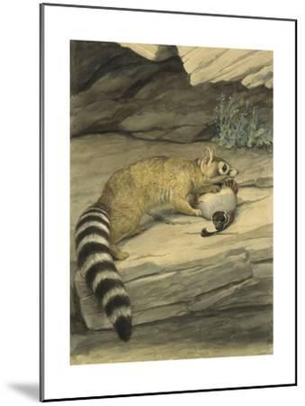 A Ring-Tailed Cat Stands with Paw on it's Prey, a Quail-Louis Agassi Fuertes-Mounted Giclee Print
