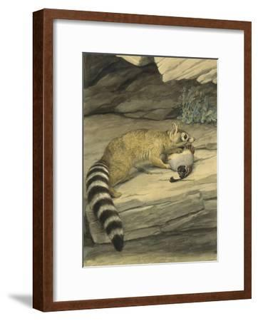 A Ring-Tailed Cat Stands with Paw on it's Prey, a Quail-Louis Agassi Fuertes-Framed Giclee Print