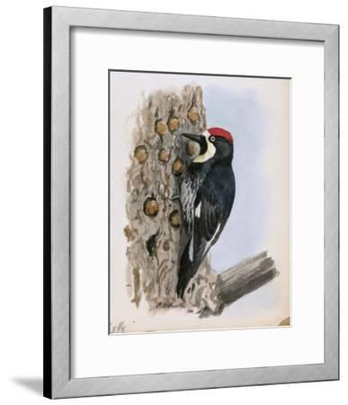 A Painting of a California Woodpecker Clinging to a Tree Trunk-Louis Agassi Fuertes-Framed Giclee Print