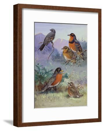 A Painting of Several Species of Robin-Allan Brooks-Framed Giclee Print