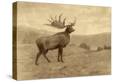 A Painting of an Irish Elk of the Pleistocene Era-Charles R. Knight-Stretched Canvas Print