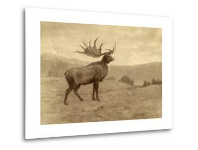 A Painting of an Irish Elk of the Pleistocene Era-Charles R. Knight-Metal Print
