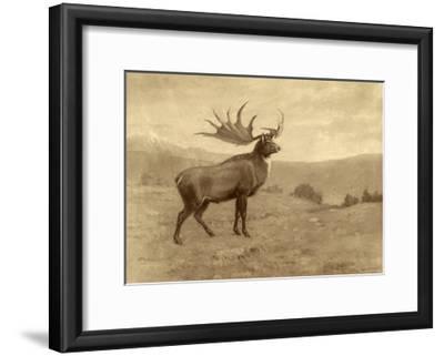 A Painting of an Irish Elk of the Pleistocene Era-Charles R. Knight-Framed Giclee Print