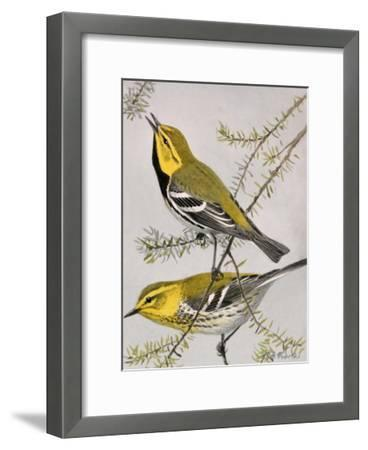 A Painting of a Pair of Black-Throated Green Warblers-Louis Agassi Fuertes-Framed Giclee Print