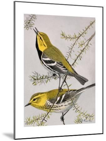 A Painting of a Pair of Black-Throated Green Warblers-Louis Agassi Fuertes-Mounted Giclee Print