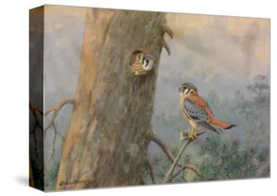 A Painting of a Male and Female Sparrow Hawk-Allan Brooks-Stretched Canvas Print