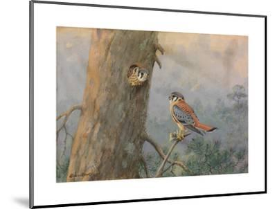 A Painting of a Male and Female Sparrow Hawk-Allan Brooks-Mounted Giclee Print