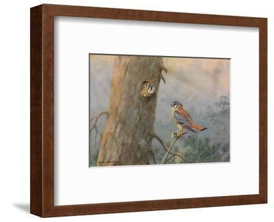 A Painting of a Male and Female Sparrow Hawk-Allan Brooks-Framed Giclee Print