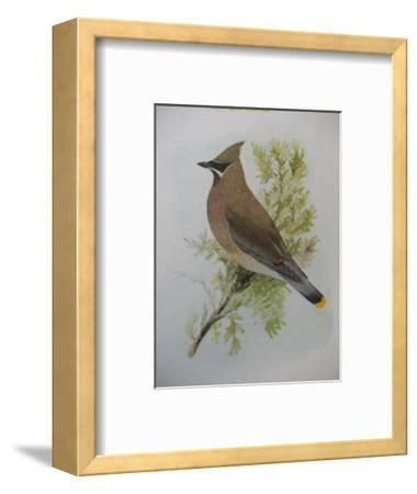 A Painting of a Cedar Waxwing Perched on a Tree Branch-Louis Agassi Fuertes-Framed Giclee Print