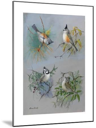 A Painting of Several Species of Titmouse-Allan Brooks-Mounted Giclee Print