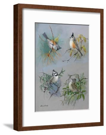 A Painting of Several Species of Titmouse-Allan Brooks-Framed Giclee Print