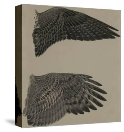 An Image of the Wings of a Falcon (Top) and a Goshawk Hawk (Lower)-Louis Agassi Fuertes-Stretched Canvas Print