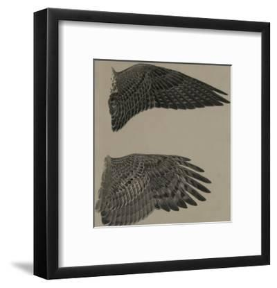 An Image of the Wings of a Falcon (Top) and a Goshawk Hawk (Lower)-Louis Agassi Fuertes-Framed Giclee Print