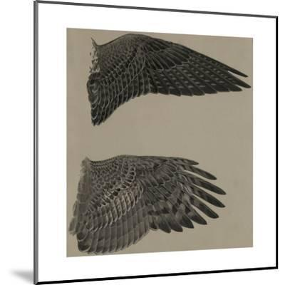 An Image of the Wings of a Falcon (Top) and a Goshawk Hawk (Lower)-Louis Agassi Fuertes-Mounted Giclee Print