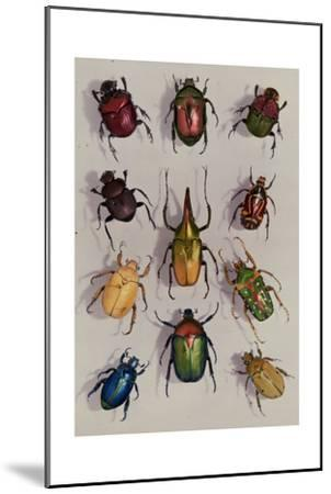 A Group of Scarabs from the Scarabaeid Family-Edwin L^ Wisherd-Mounted Photographic Print