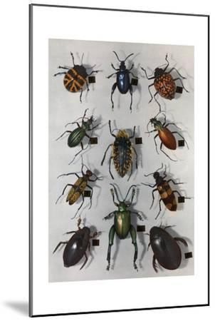 Collection of Various Beetles-Edwin L^ Wisherd-Mounted Photographic Print