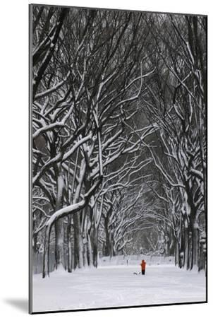 A Person under a Canopy of Snow Laden Trees in Central Park-Kike Calvo-Mounted Premium Photographic Print