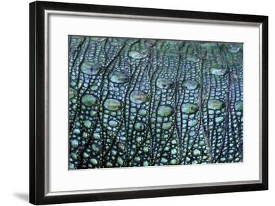 The Prehistoric Green Scales on the Flank of a Northern Caiman Lizard-Jason Edwards-Framed Photographic Print