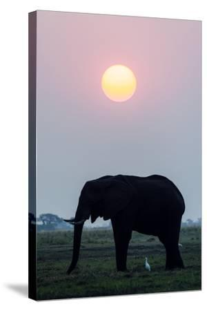 An Egret Stands Underneath an African Elephant Feeding on a Grass Island at Sunset-Jason Edwards-Stretched Canvas Print