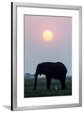 An Egret Stands Underneath an African Elephant Feeding on a Grass Island at Sunset-Jason Edwards-Framed Photographic Print