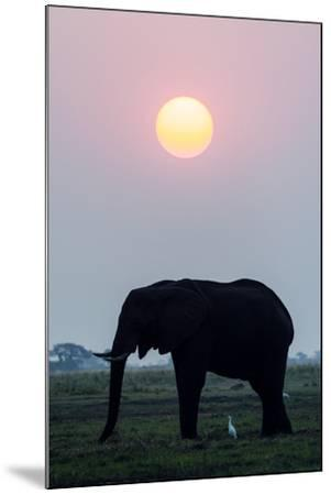 An Egret Stands Underneath an African Elephant Feeding on a Grass Island at Sunset-Jason Edwards-Mounted Photographic Print