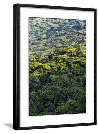 Dawn Lights a Dense Evergreen Forest and Highland Trees on the Steep Slopes of a Volcano Crater-Jason Edwards-Framed Photographic Print