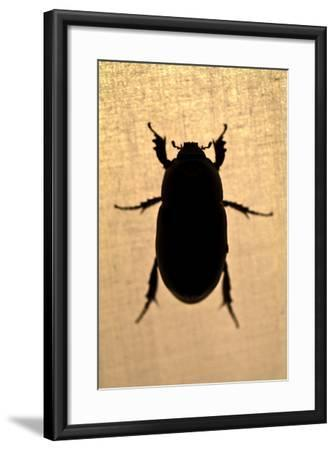 The Silhouette of a Beetle Resting on the Canvas of a Tent in the Amazon Rainforest at Night-Jason Edwards-Framed Photographic Print