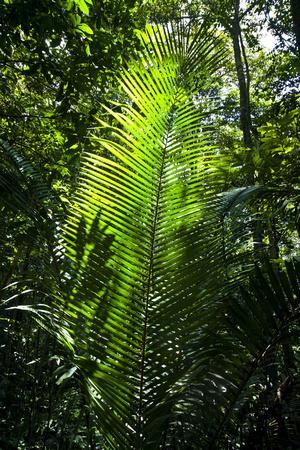 Sunlight Passing Through the Tree Canopy Backlights the Frond of a Palm-Jason Edwards-Framed Photographic Print