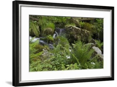 Ferns, Mosses, and Wildflowers Growing around Kleine Ohe Creek-Norbert Rosing-Framed Photographic Print
