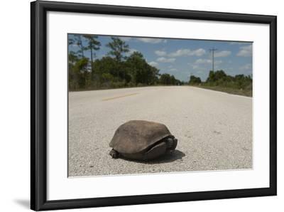 A Gopher Tortoise Near Kissimmee Prairie Preserve State Park-Joel Sartore-Framed Photographic Print