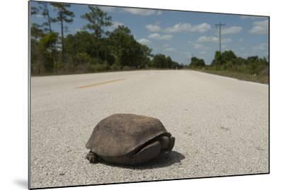A Gopher Tortoise Near Kissimmee Prairie Preserve State Park-Joel Sartore-Mounted Photographic Print