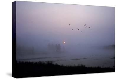 Canada Geese Fly over Alum Creek at Dawn-Tom Murphy-Stretched Canvas Print
