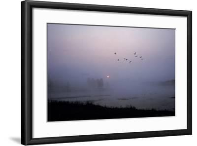Canada Geese Fly over Alum Creek at Dawn-Tom Murphy-Framed Photographic Print