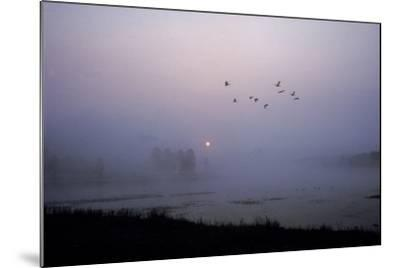Canada Geese Fly over Alum Creek at Dawn-Tom Murphy-Mounted Photographic Print